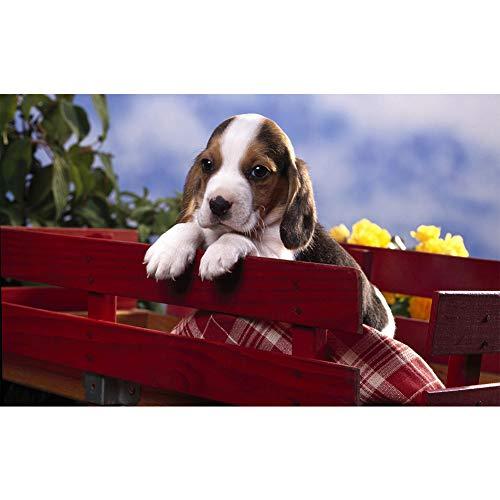 SINACO Kit de pintura de diamante 5D para manualidades, para adultos, niños, principiantes, descortación en casa, presentaciones de regalo para Her Him Puppy 15,7 x 11,8 pulgadas, 1 paquete