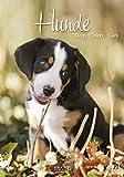 Hunde - Kalender 2021 - Korsch-Verlag - Fotokalender mit bezaubernden Hündchen und Platz zum Eintragen - Fotokunst - 24 cm x 34 cm