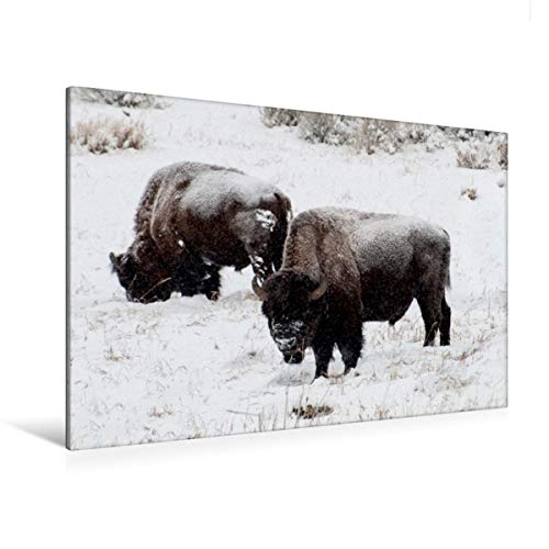 Premium Textil-Leinwand 120 x 80 cm Quer-Format Bisons am Blacktail Plateau | Wandbild, HD-Bild auf Keilrahmen, Fertigbild auf hochwertigem Vlies, Leinwanddruck von Marianne Drews