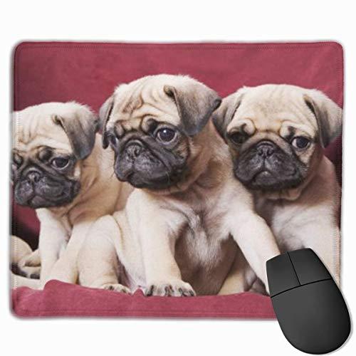Pugs, sofás, Mantas, fotografías en Color Alfombrilla de ratón Divertida Alfombrilla de ratón Alfombrilla de Oficina para computadora portátil, computadora, Alfombrillas de ratón