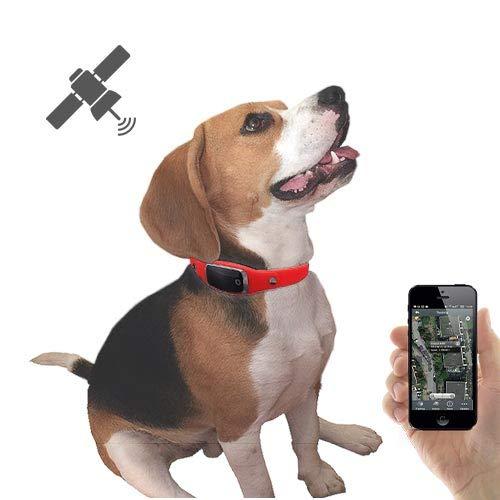 Le collier GPS chat Active Media Concept