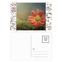 暗赤色の美しい花 公式ポストカードセットサンクスカード郵送側20個