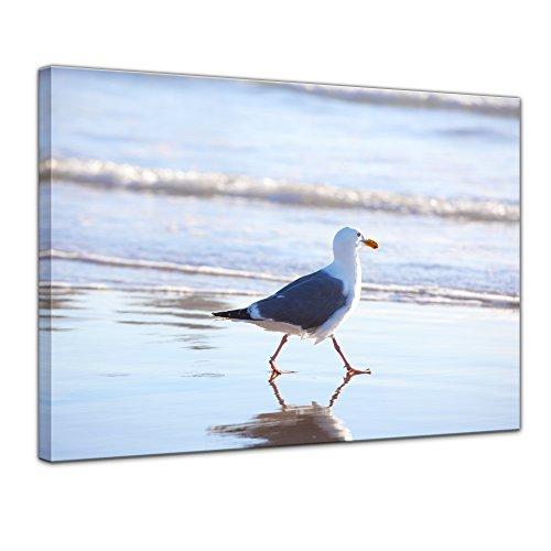 Wandbild Möwe am Strand - 80x60 cm Bilder als Leinwanddruck Fotoleinwand Tierbild Vogel - Meer - Möwe am Wasser