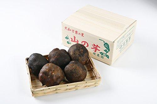 ヤマノイモ 栽培時 農薬 化学肥料 不使用 大和万葉の里 堤さんの 山の芋 3~5個約1.5kg 奈良 産地直送