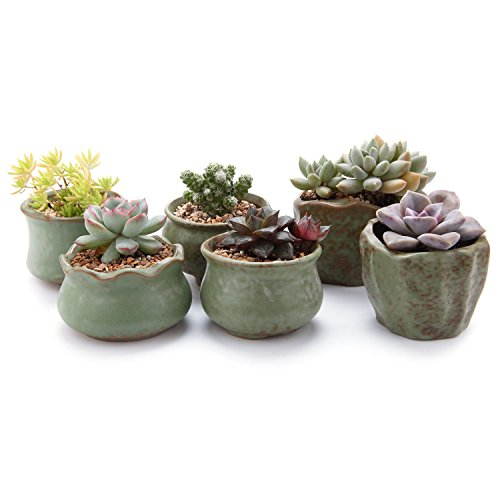 """T4U 2.75-3""""Spring Serial Sets Sucuulent Cactus Plant Pots Flower Pots Planters Containers Window Boxes Green 1 Pack of 6"""