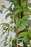 Zoom IMG-2 planti piante vere da esterno