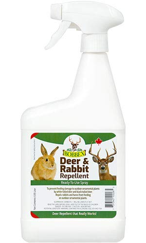 Bobbex Pest Control Products - Best Reviews Tips