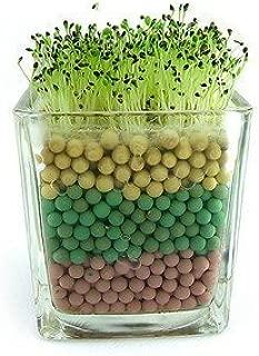 20 semillas / pack Corazón de semillas de pasto de escritorio Mini Bonsai en forma de Hear-semillas de la hierba del jardín de flores Decoración Bonsai: Amazon.es: Jardín