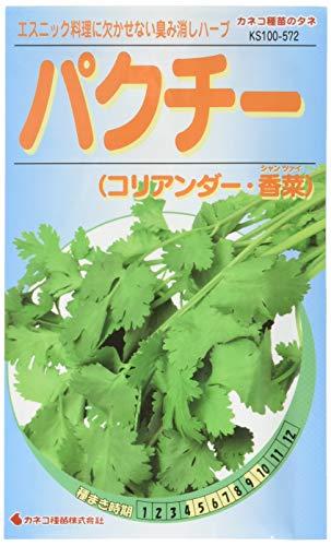 パクチー (コリアンダー・香菜(シャンツァイ))