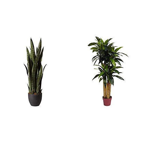 Nearly Natural, Green 4855 35in. Sansevieria with Black Planter & 6648 4ft. Corn Stalk Dracaena Silk Plant (Real Touch),Green