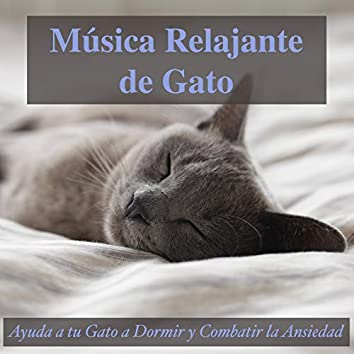 Música Relajante de Gato: Ayuda a Tu Gato a Dormir y Combatir la Ansiedad