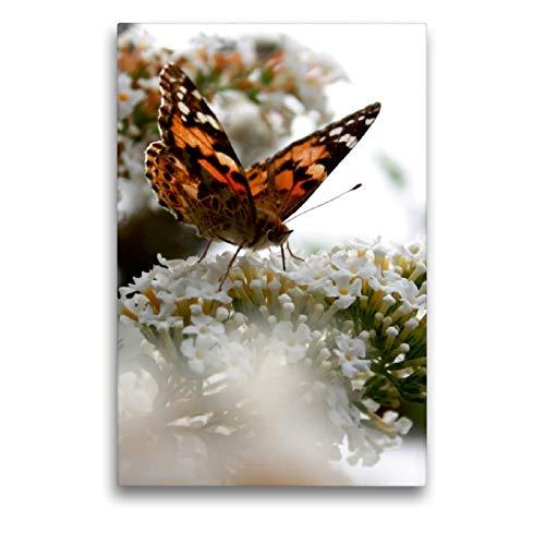 Premium Textil-Leinwand 50 x 75 cm Hoch-Format Schmetterling | Wandbild, HD-Bild auf Keilrahmen, Fertigbild auf hochwertigem Vlies, Leinwanddruck von Christine Bässler