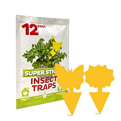 SURENSHY Fruit Fly TrapsSticky Traps and Gnat Traps for Indoor/Outdoor UseGnat Killer for Fruit FliesMosquitoesFlying InsectsFungus Gnats(12 Pack)