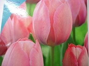 Best tulip mystic van eijk Reviews