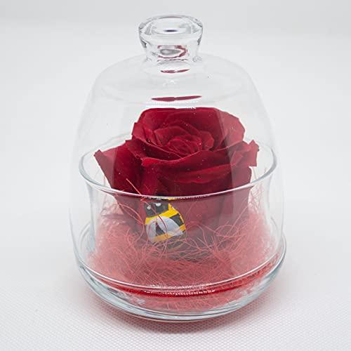 Rosa roja conservada en campana de cristal, rosa eterna roja con abeja...