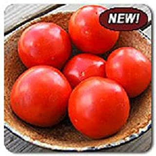 Best iron lady tomato seeds Reviews