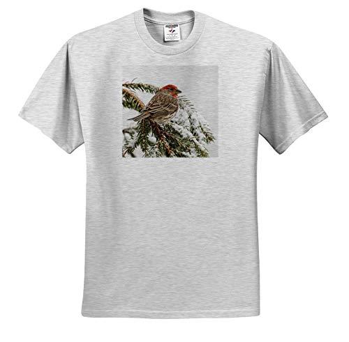 3dRose Danita Delimont - Birds - Male House Finch in Winter - Youth Birch-Gray-T-Shirt Small(6-8) (ts_345316_28)
