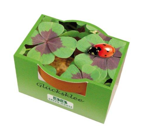 5er Minipflanzset Glücksklee