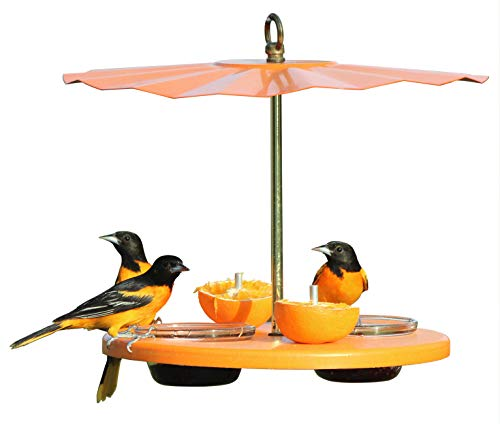Kettle Moraine Recycled Orange Oriole Fruit, Jelly, Mealworm Bird Feeder w/Orange Roof