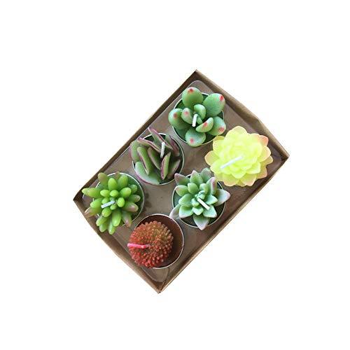 YanSheng Succulent Cactus Tea Light Candles Unscented 6pcs Assorted for Birthday Party Favors Wedding Decor Gift Sets