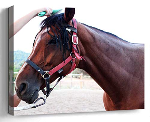 Wall Art Canvas Print Photo Artwork Home Decor (24x16 inches)- Horse Trim Comb Horse Brushing A Horse Brown