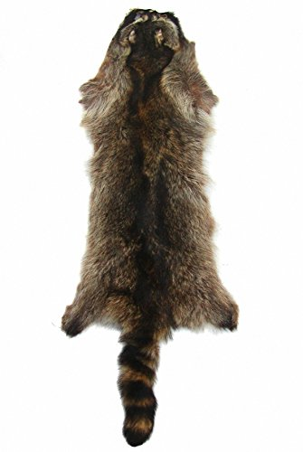 Ensuite interessantes Wildfell, Waschbärfell mit Schweif, für Dekoration und Bekleidung, ca. 50x25 cm