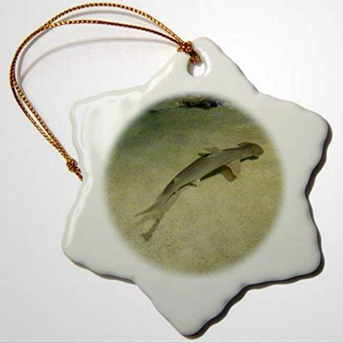 BYRON HOYLE Fotos-Boston, kleiner Hai, der ein Schwimmen im Boston, Aquarium-Ornamente, Schneeflocken-Ornament, Weihnachtsdekoration, Weihnachtsgeschenk, Weihnachtsdekoration