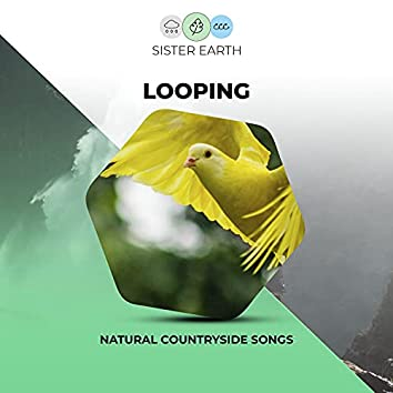 ! ! ! ! ! ! ! ! Looping Natural Countryside Songs ! ! ! ! ! ! ! !