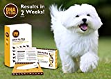 Canine Genetic Age Test DNA My Dog NEXTGEN