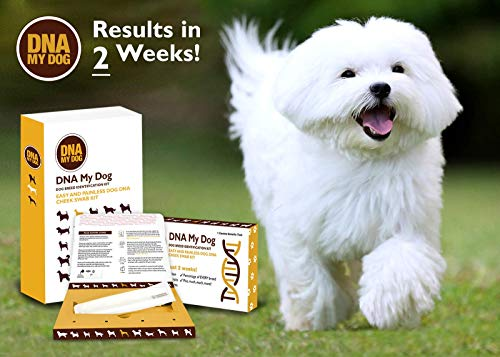 Top 10 best selling list for dna my dog cost