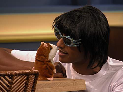 Hamster und Flöten