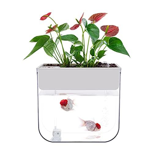 JJWC Klarer Kunststoff-Fischtank-Desktop-ökologisches Aquarium für Indoor-Dekoration