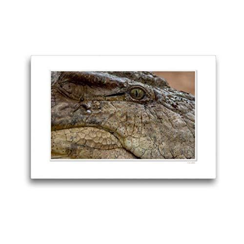 CALVENDO Lienzo Premium de 45 cm x 30 cm, Horizontal, un Motivo del Calendario emocionante: los Ojos de los Animales. Cuadro de Pared en Lienzo, diseño de Animales