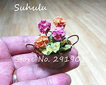 Vistaric 100pcs Rare Mini Geranium Graines Vivaces Belles Fleurs Graines Pelargonium Peltatum Graines disponibles bonsaï en pot mélange couleurs 13
