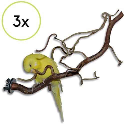 3 verschnörkelte Korkenzieherhasel Action Sitzstangen - das perfekte Vogelzubehör für Ihren...