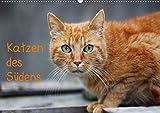 Katzen des Südens (Wandkalender 2020 DIN A2 quer)