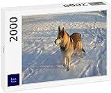Lais Puzzle Lobo 2000 Piezas