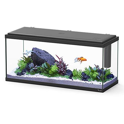 für Negro Aquarium, Schwarz