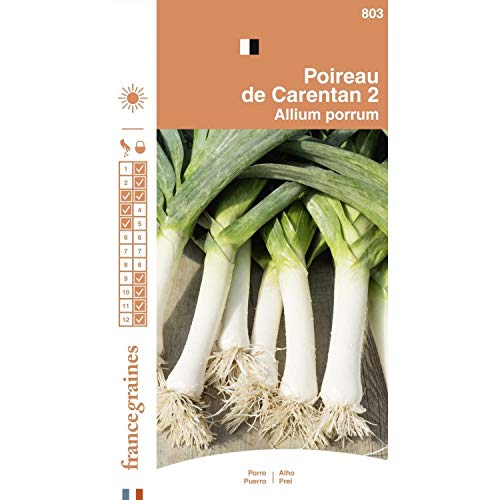 allium porrum Porro de carentan 2 graines semences agricoles environ 2000 graines poireaux