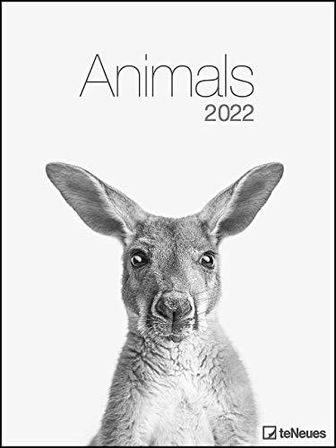 Animals 2022 - Foto-Kalender - Poster-Kalender - 48x64 - Tiere