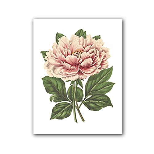 Pink Tree Peony Botanical Illustration Poster Print Plant Floral Vintage Canvas Wall Art Picture Painting Wall Decor 40x50 cm x1 No Frame