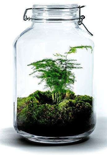 Growing Concepts DIY Nachhaltiges Ökosystem Flaschengarten Einmachglas 5L - Aspargus - H28xØ18cm