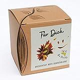 Geschenk-Anzuchtset'Für Dich' - Sonnenblume Abendrot