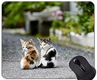 Mouse Pad with Stitched Edge,Entertainment Kitten cat Home Office Computer Accessories Mousepads