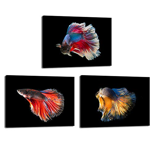 iKNOW FOTO Betta Fish Canvas Wall art for Living Room Colorful Fighting Fish on Black Background Photo Giclee Premium Quality Artwork Decor for Modern House Decor Ready to Hang 12x16inchx3pcs