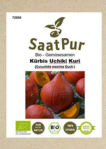 Bio Gemüse Samen Kürbis Uchiki Kuri beliebter Speisekürbis Hokkaido-Kürbis für ca. 10 Pfl.