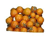 超甘い サンシュガー ミニトマト 種 6粒
