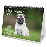 Mopszauber DIN A5 Tischkalender für 2021 Mops Hunde und Welpen - Geschenkset Inhalt: 1x Kalender, 1x Weihnachts- und 1x Grußkarte (insgesamt 3 Teile)
