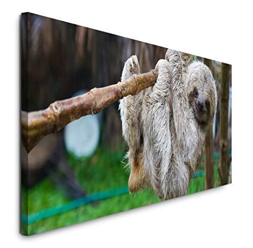 Paul Sinus Art GmbH Baby Faultier 120x 50cm Panorama Leinwand Bild XXL Format Wandbilder Wohnzimmer Wohnung Deko Kunstdrucke