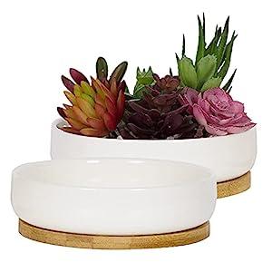 白色陶瓷花盆竹盘